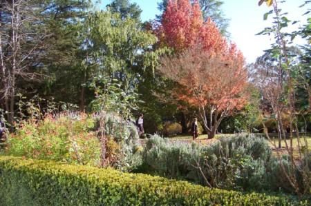 trees in week 2