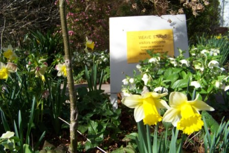 Daffodils and the studio sign