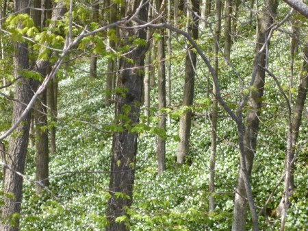 A carpet of terrilium under a canopy of green.